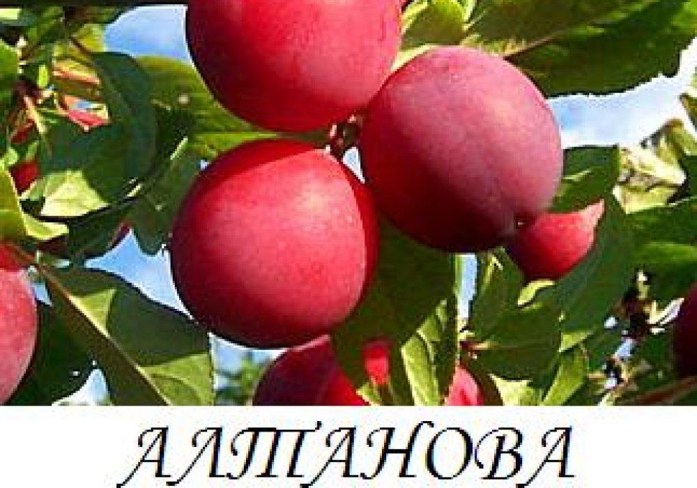altanova_renkloda