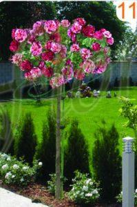 щамбови рози