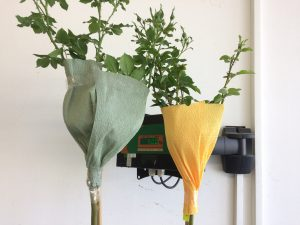 пакетирани щамбови рози