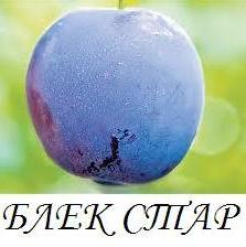 blek_star