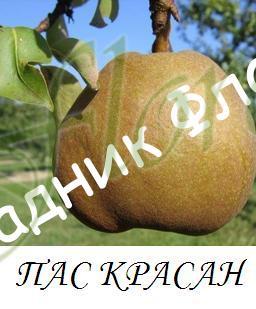 pas_krasan