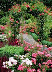 Розова градина